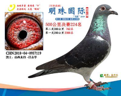 2019武威明珠224