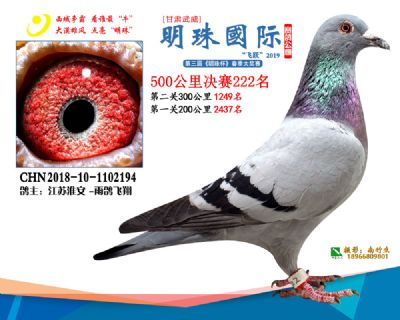 2019武威明珠222