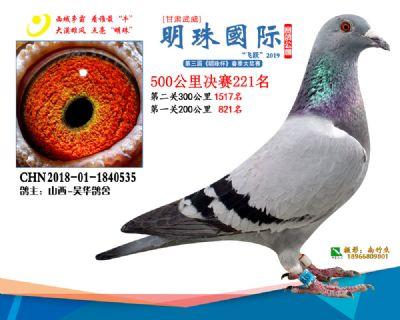 2019武威明珠221