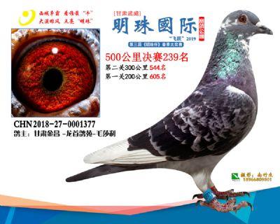 2019武威明珠239
