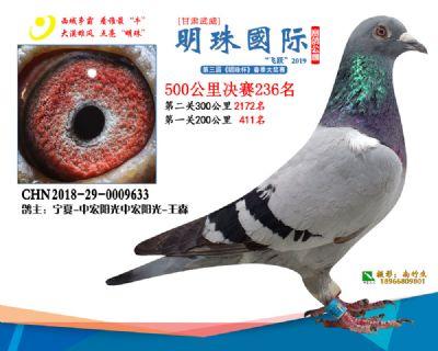 2019武威明珠236