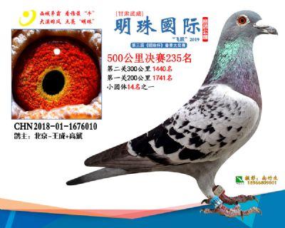 2019武威明珠235