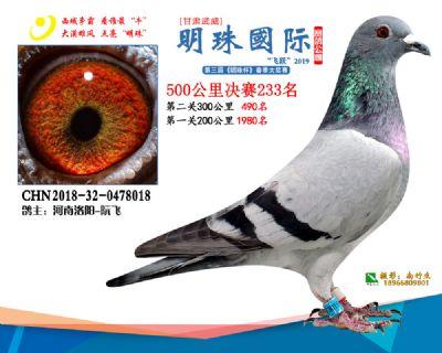 2019武威明珠233