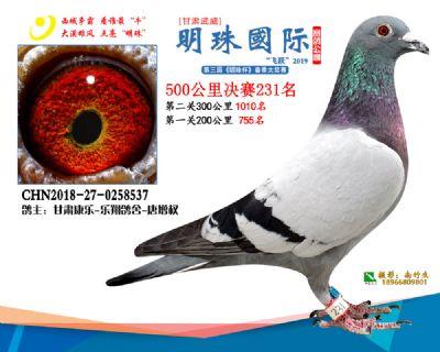 2019武威明珠231