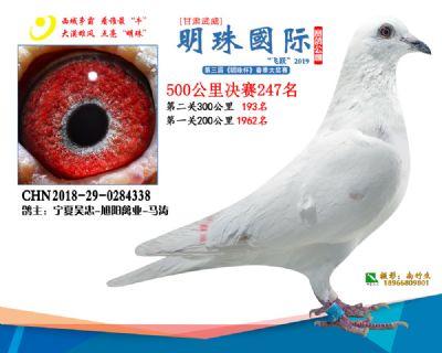 2019武威明珠247