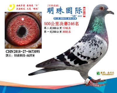2019武威明珠246