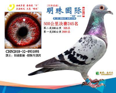2019武威明珠245