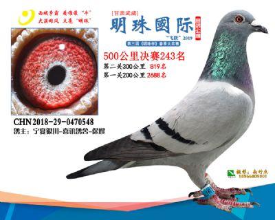 2019武威明珠243