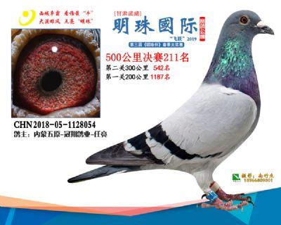 2019武威明珠211