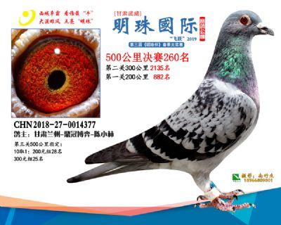 2019武威明珠260