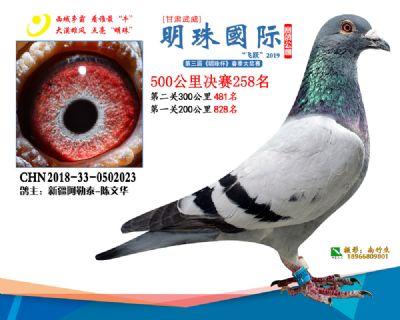 2019武威明珠258