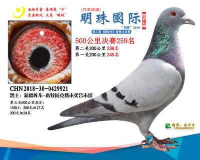 2019武威明珠259
