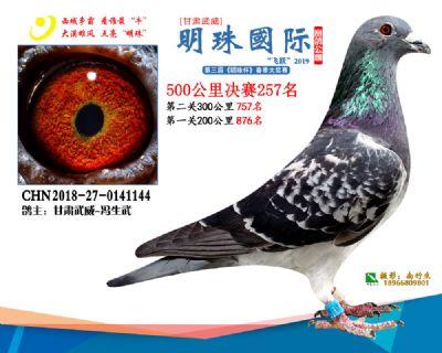 2019武威明珠257