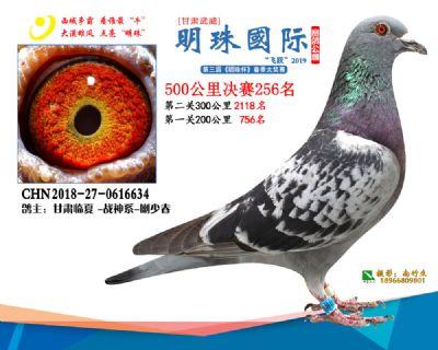 2019武威明珠256