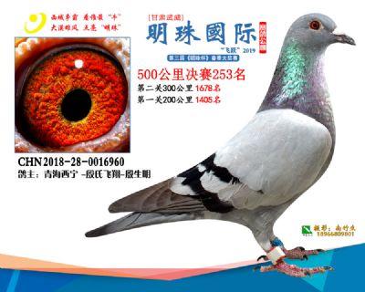 2019武威明珠253