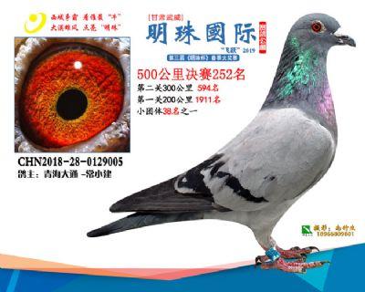 2019武威明珠252