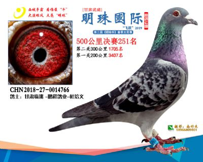 2019武威明珠251