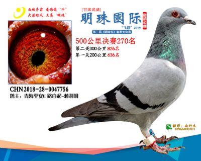 2019武威明珠270