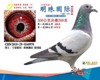 2019武威明珠268