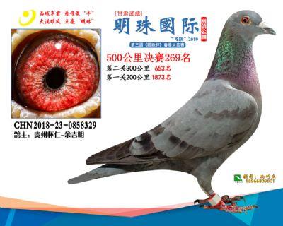 2019武威明珠269
