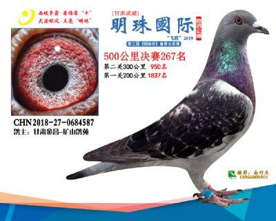 2019武威明珠267