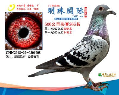 2019武威明珠266