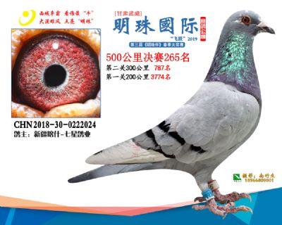 2019武威明珠265
