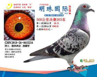 2019武威明珠263