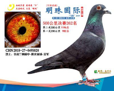 2019武威明珠262