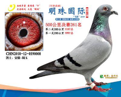 2019武威明珠261
