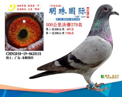 2019武威明珠279