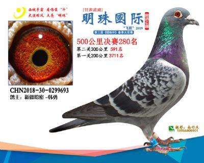 2019武威明珠280