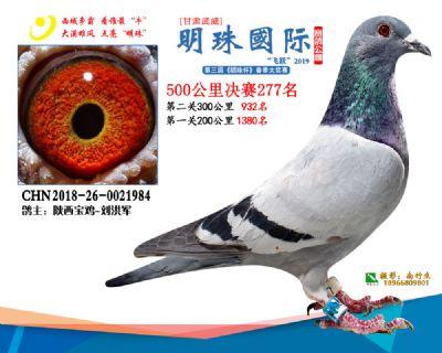 2019武威明珠277