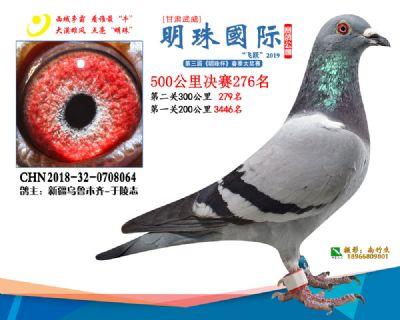 2019武威明珠276