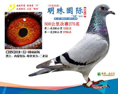 2019武威明珠275