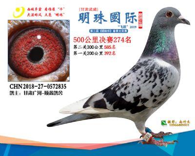 2019武威明珠274