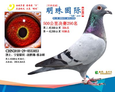 2019武威明珠290