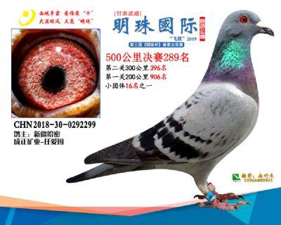2019武威明珠289