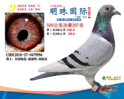 2019武威明珠287