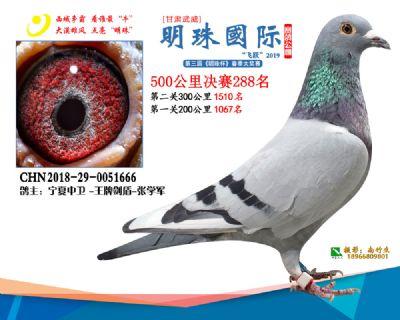 2019武威明珠288