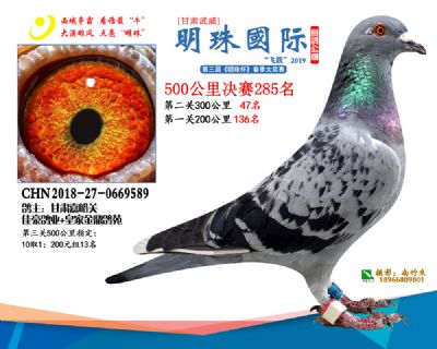 2019武威明珠285