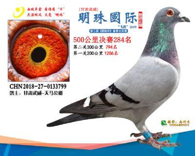 2019武威明珠284