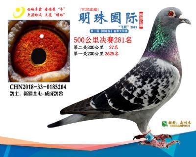 2019武威明珠281