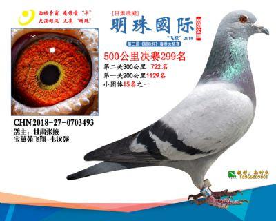 2019武威明珠299
