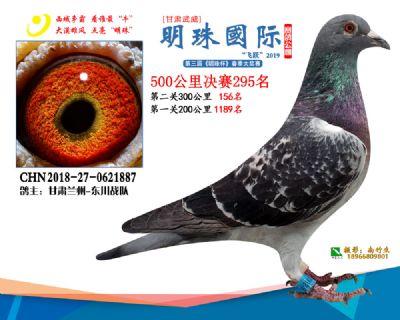 2019武威明珠295