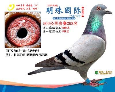2019武威明珠293