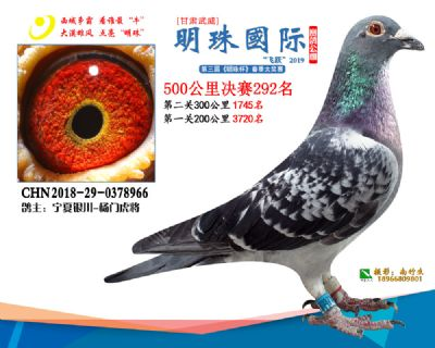 2019武威明珠292