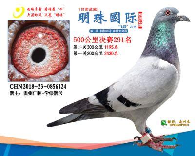 2019武威明珠291