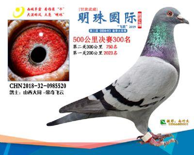 2019武威明珠300