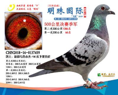 2019武威明珠3